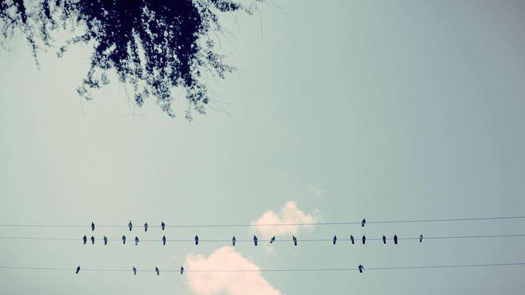 #myanmar #yangon #sheetmusic  #travelwithme #traveltheworld #life #lifestyle #girlphotographer #rainzoe #緬甸 #仰光 #旅遊 #southeastasia #travellife #lonelyplanet #ヤンゴン #양곤 #미얀마 #ミャンマー #トラベル #東南亞 #東南アジア #bird by rainzoe_foto