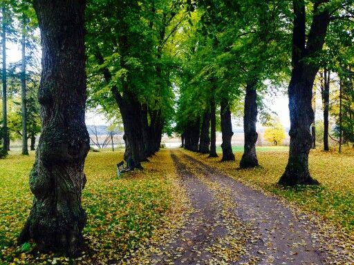 Sisämaanmuija merenrannalla. Porvoo, Finland.