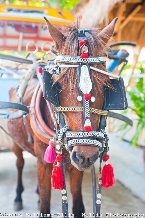 Horse and Cart on Gili Trawangan, Gili Isles, Indonesia.