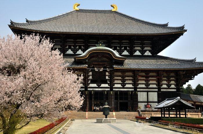 奈良に来たら、やはり大仏様をひと目見ておかなくては始まりません。世界遺産・東大寺は奈良時代(8世紀)に聖武天皇が建立した華厳宗大本山の寺院です。こちらの写真でもわかる通り、扉付近に立つ人の大きさはまるで豆粒のよう。何度来てもその巨大なスケールに圧倒されてしまいます。 【アクセス】近鉄奈良駅から徒歩約20分、または市内循環バス「大仏殿春日大社前」にて下車、徒歩5分