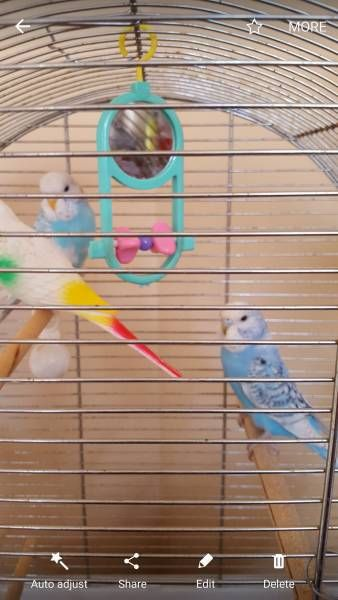 LOST BUDGERIGAR: 18/09/2016 - Winsford, Cheshire West and Chester, England, United Kingdom. Ref#: L26468 - #ParrotAlert #LostBird #LostParrot #MissingBird #MissingParrot #LostBudgerigar #MissingBudgerigar