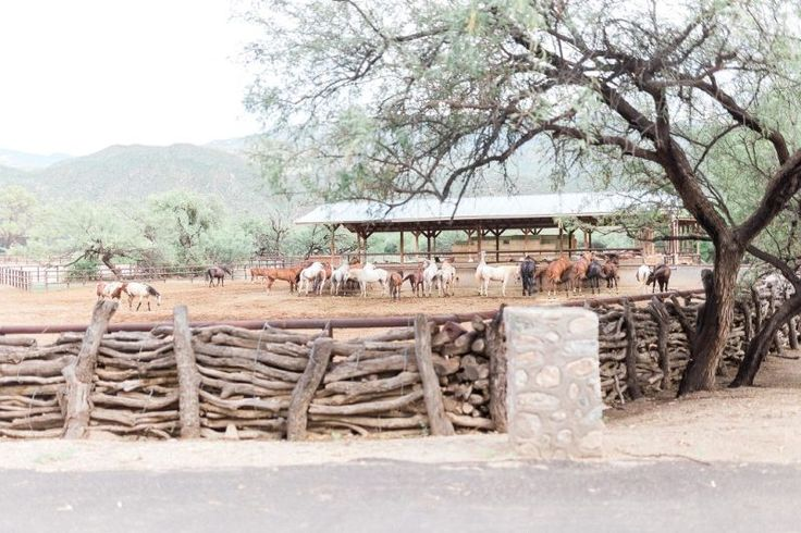 Tanque Verde Guest Ranch Wedding Venue Horse Stable Marie Cameron Photography