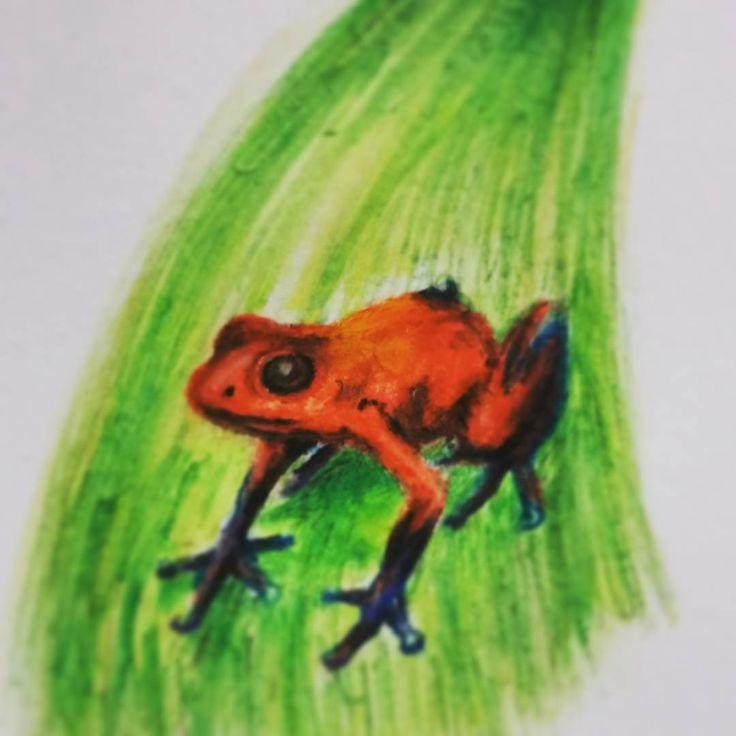 Worksheet. Ms de 25 ideas increbles sobre Una rana en Pinterest  La red