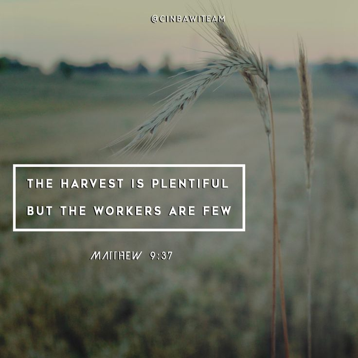Matthew 9:37  The harvest is plentiful but the workers are few.