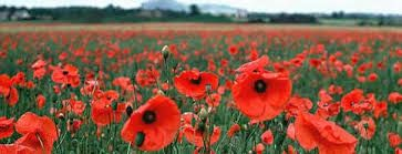 Image result for human proportions lesson remembrance day