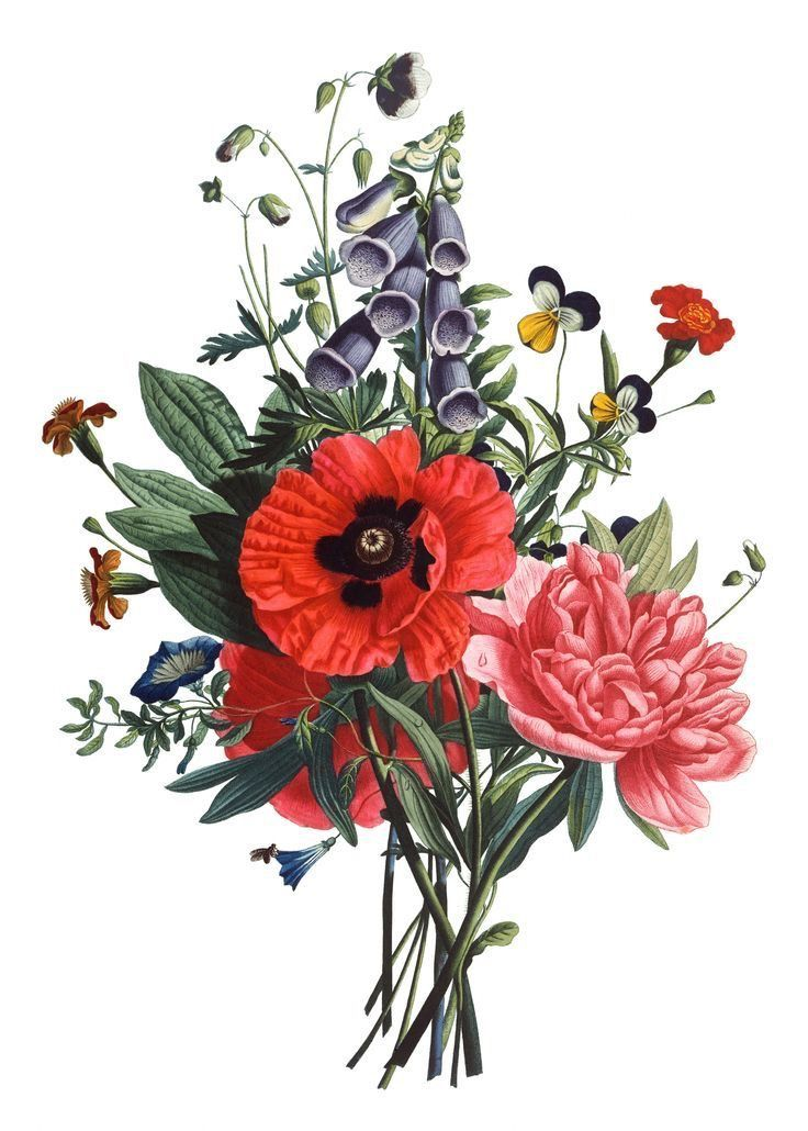 Jean Louis Prevost Bouquet Di Digitale Papavero E Peonie