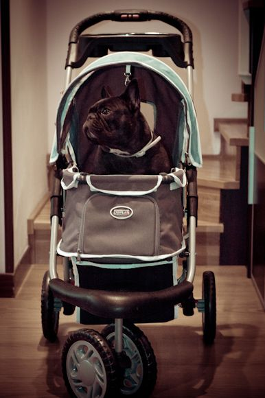 Cochecito para perros, pussettes pour chien, dog buggy
