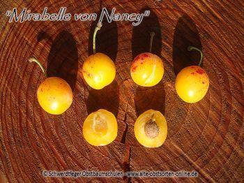 """Zwergmirabelle / Zwergpflaume """"Mirabelle von Nancy"""" - Zwergobstbaum!"""