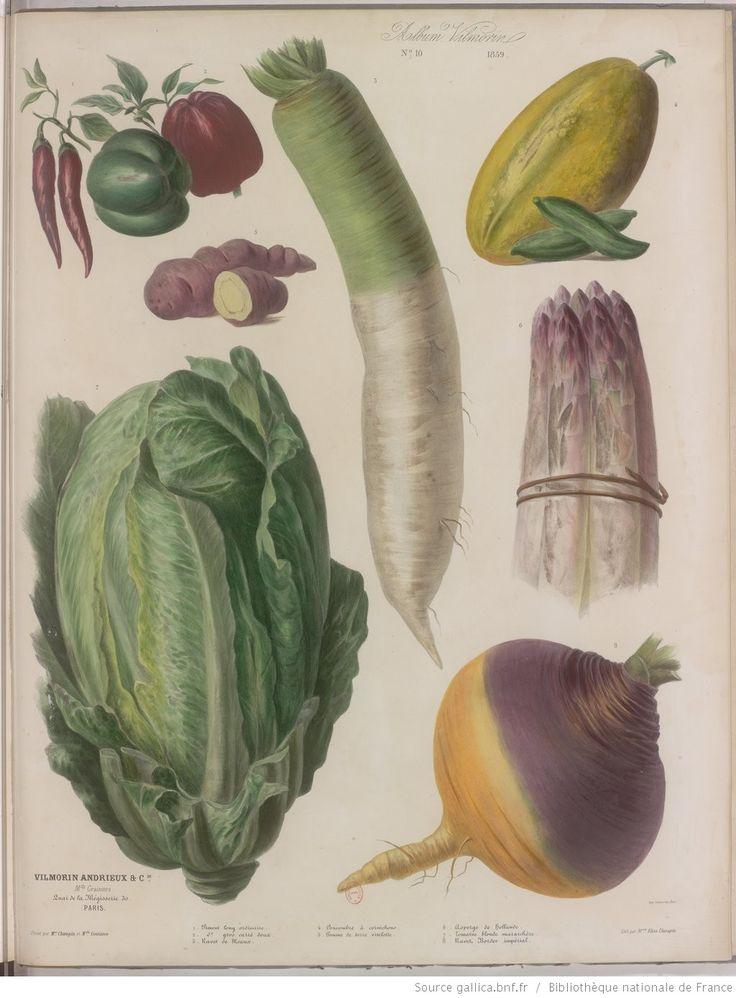 1000 id es propos de plantes annuelles sur pinterest for Grandes jardinieres exterieures