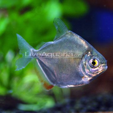 Tropical fish pets and products on pinterest for Exotic fish and pets