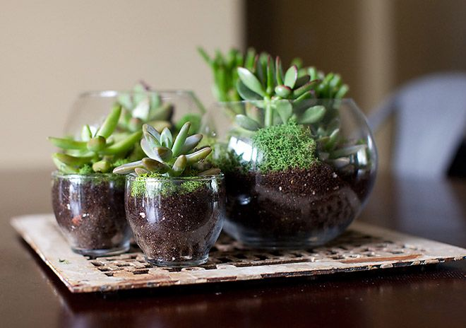 I will definitely be making a terrarium or 2 this fall :)