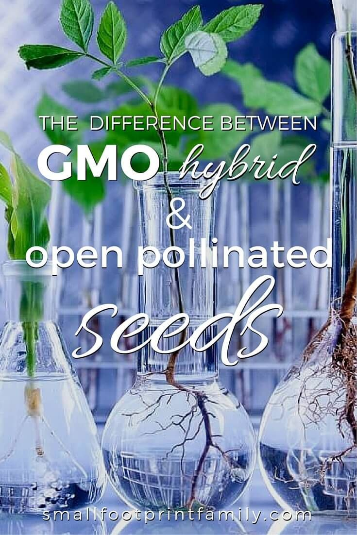 "Open-pollinated, hybrid and GMO seeds are not all the same, and genetic modification is not ""just another"" form of seed breeding. Click to learn the difference!  #garden #gardening #organicgarden #permaculture #homesteading #urbangarden #nogmos #gmofree #sustainableagriculture #organicfarming #seeds"