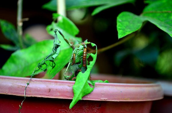 Natural DIY Garden Insecticides - http://za.keter.com/554937