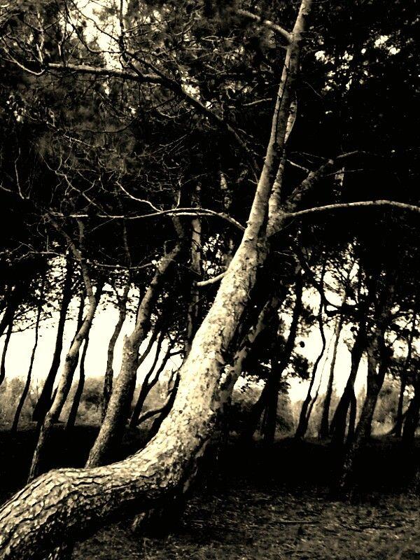 Pineta, Campomarino (CB). Variazione del colore effettuata con Photo Art