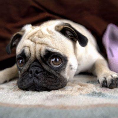 FDA Probes Dog Illnesses Tied to JerkyTreats #dogs | Health.com