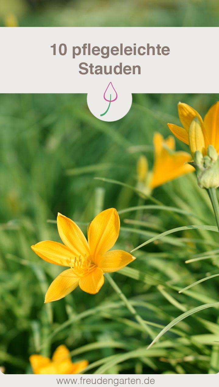 8 pflegeleichte Gartenpflanzen, die keine Mühe machen   Stauden ...