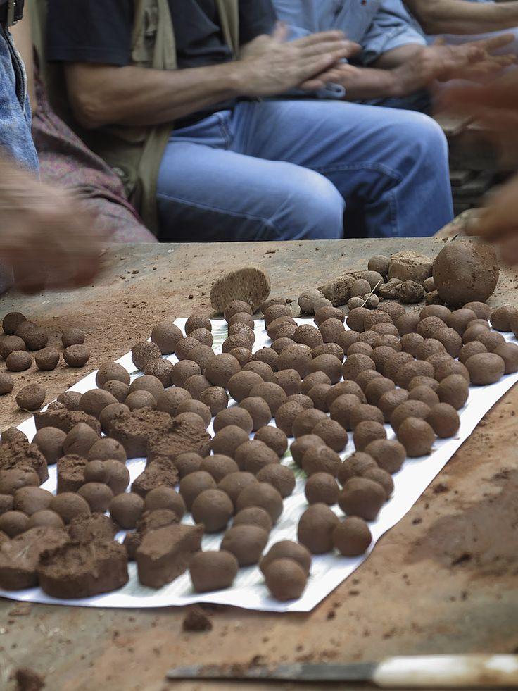 ΙΩΚΗ                  : ΜΕΘΟΔΟΣ ΦΟΥΚΟΥΟΚΑ!!!! Φυσική καλλιέργεια άφθονης τροφής σε άγονες περιοχές!!!