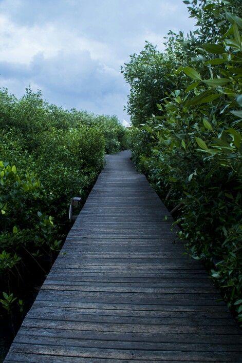 02_02_2014 (Mangrove Garden)