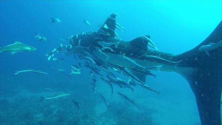Whale Shark Sighting West Palm Beach 4/9/17