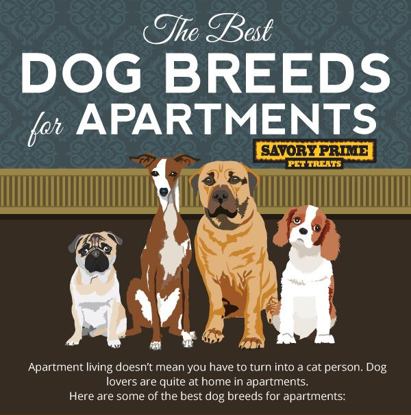 The Best Dog Breeds For Apartment Living Best Apartment Dogs Best Dog Breeds Apartment Dogs Breeds