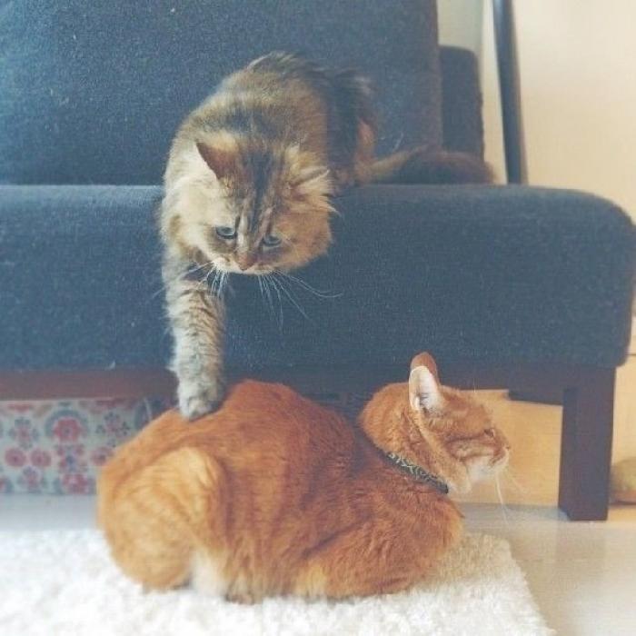 какие работы фото как котик извиняется любят только дети
