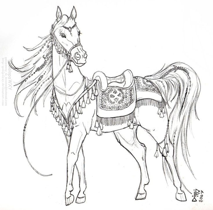 Arab Mare In Ceremonial Tack By GalopaWXY On DeviantArt Horse Coloring PagesColoring
