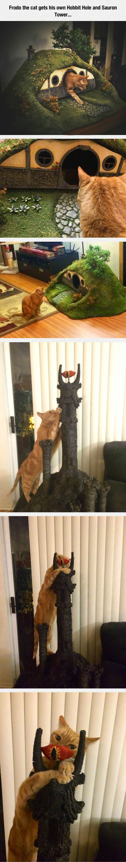 One Cat to Rule Them All.