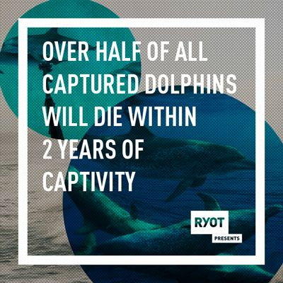 10 Facts You Should Know About Dolphins