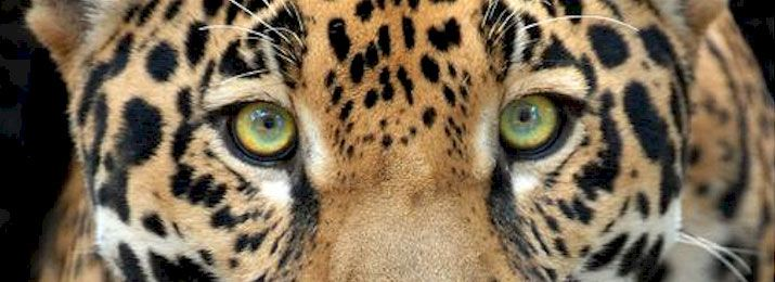 Why can't leopards escape from the zoo? They always get spotted.  Zoo Miami http://www.destinationcoupons.com/florida/miami/miami-zoo/miami-zoo-coupons.asp #Coupon #SoFla #Deals #Zoo #Miami