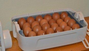 Rätt förvarade har ägg extrem hållbarhet, lista över metoder och lagringstider.