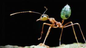 Deborah Gordon: The emergent genius of ant colonies   TED Talk   TED.com
