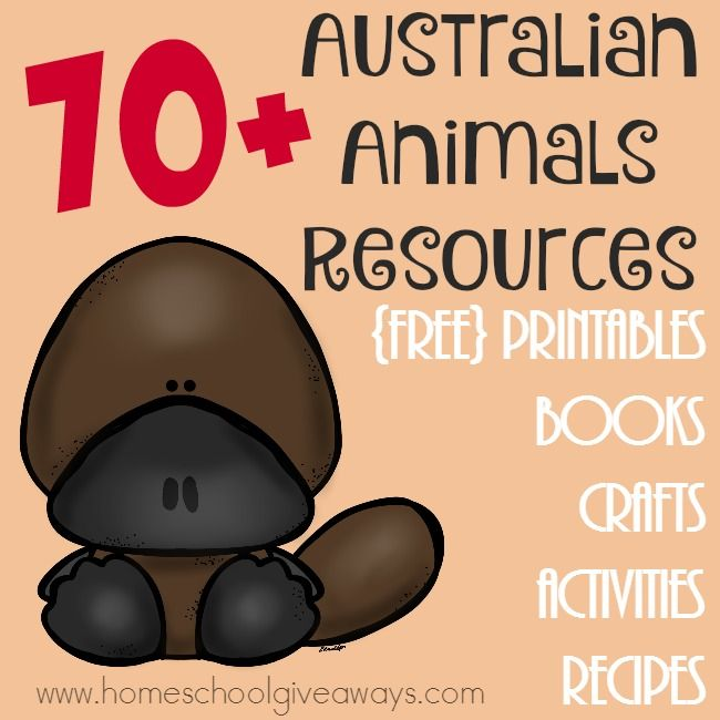 FREE 70 Australian Animals Resources: Printables, Crafts & MORE! | Free…