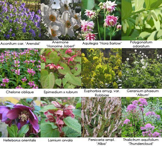 Vaste planten voor uw (half) schaduwborder