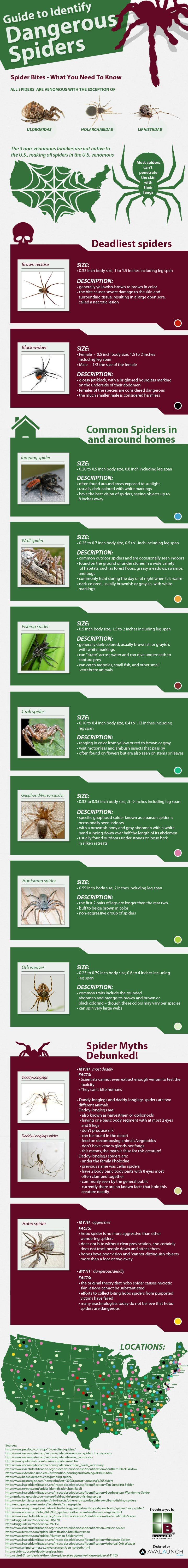 Helpful guide for identifying dangerous spiders - useful for anyone that is spending time outdoors