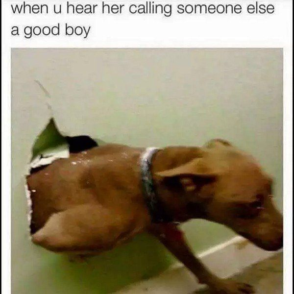 Memes about dogs are excited you're home! – 28 Pics