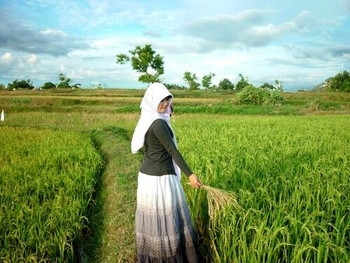 Oryzasativa#field#indonesia
