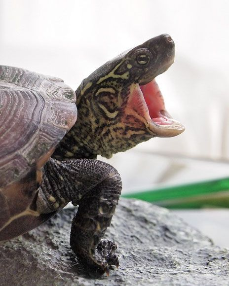 Best 20 Turtle Habitat Ideas On Pinterest Tortoise