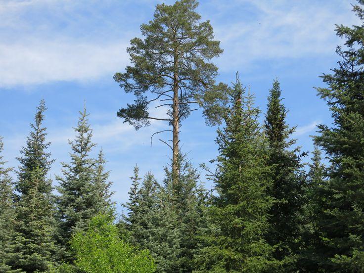 krásný les