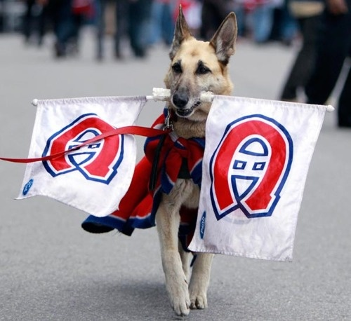 Montreal Canadiens unofficial mascot