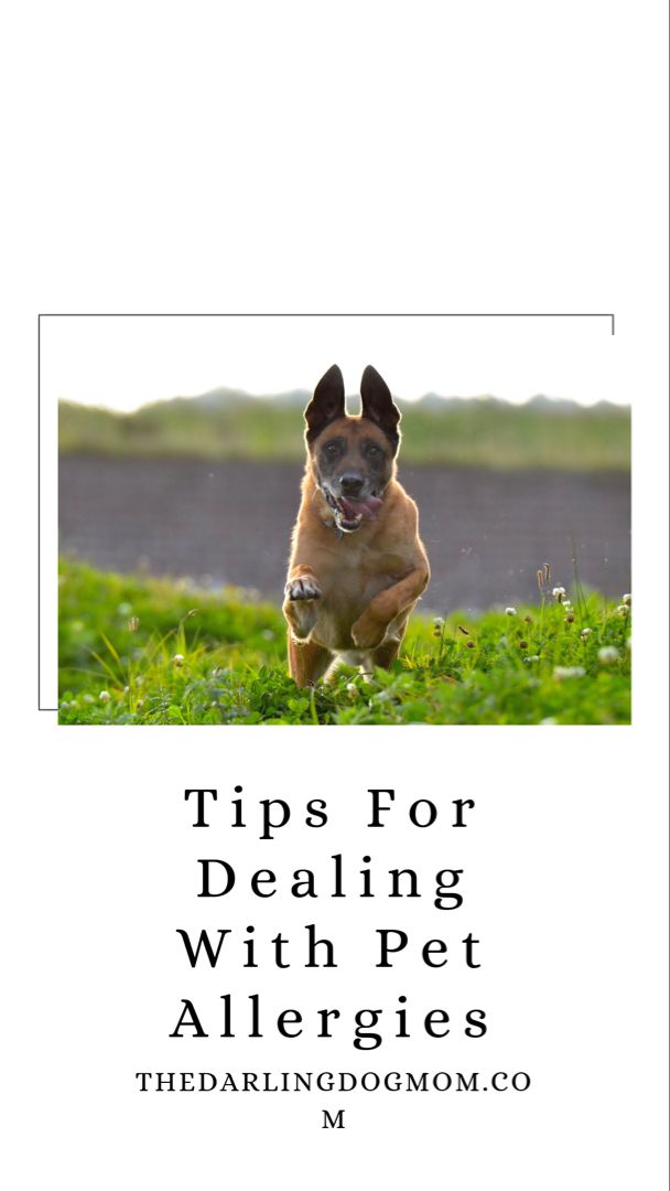 Tips For Dealing With Pet Allergies Pet Allergies Allergies Dog Allergies