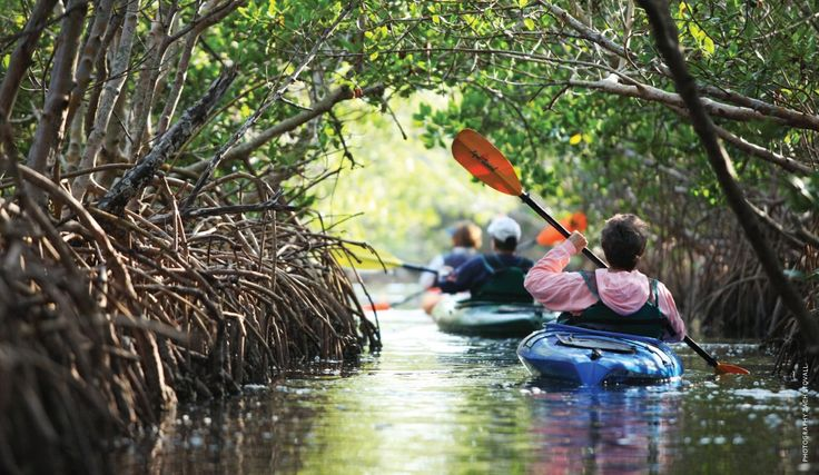 kayaking the mangroves in New Smyrna Beach, FL. Reasons i regret giving up my Florida home