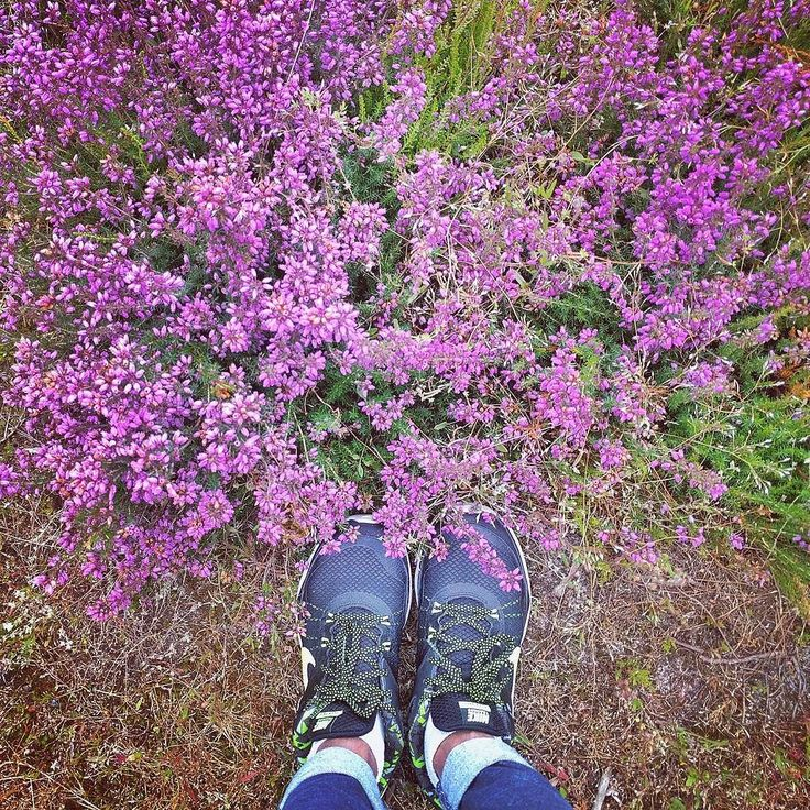 Everybody got their reason  Everybody got their way We're just catching and releasing What builds up throughout the day #mattsimons #randonnée #summertime #summer #nature #wild #france #purple #nike #nikeair #flowers #sport #girl #fontainebleau #instalike #instafrance #igers #igersparis #music