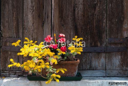 """Téléchargez la photo libre de droits """"jardinière et volet bois, Murano, Venise"""" créée par Aurélien Antoine au meilleur prix sur Fotolia.com. Parcourez notre banque d'images en ligne et trouvez l'image parfaite pour vos projets marketing !"""