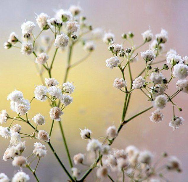 Маленькие беленькие цветочки в букетах, доставка цветов