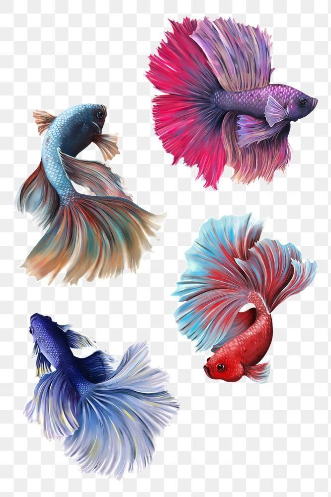 Download Premium Png Of Beautiful Betta Fish Collection Design Element Fish Illustration Betta Fish Fish Drawings