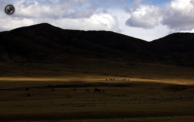 """Новости: Как в Монголии добывают золото """"шахтеры-ниндзя"""""""