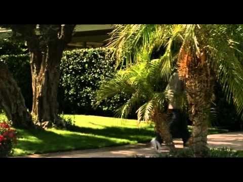 Alpha Dog CZ celý film - YouTube