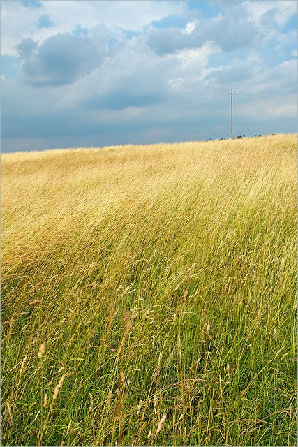Field by Waldek & Lidka, via Flickr  Kolbuszowa, Poland