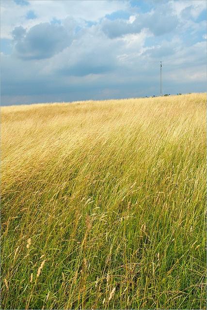 Field by Waldek & Lidka, via Flickr  Kolbuszowa, Poland