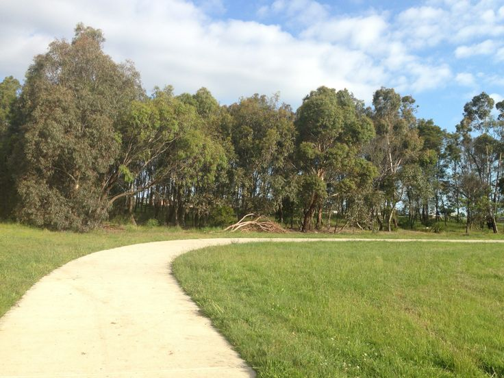 curved path and trees